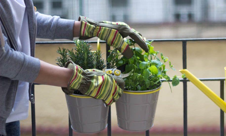 Veľký bylinkový sprievodca alebo čopestovať na balkóne