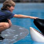 Čo sa stalo so slávnymi filmovými zvieratami?
