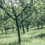 Kde zbierať čerstvé ovocie zdarma