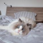 Keď si vaša mačka zaslúži sedenie upsychológa