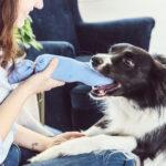 Radosť pre psíka: Vyrobte mu jednoduchú hračku zo starých ponožiek