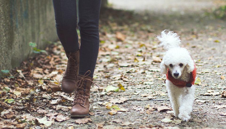 Pravidlá poctivej chôdze