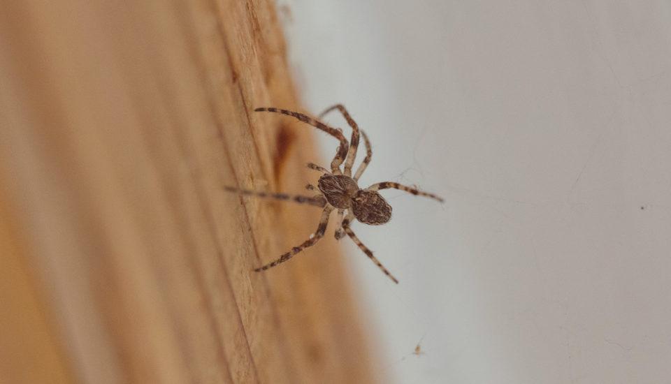 Vojna proti pavúkom. Ako vyhnať pavučiny zkaždého kúta?