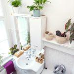 Najlepšie miesto pre izbové rastliny? Kúpeľňa!
