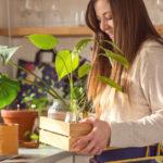 Tipy na správne množenie izbových rastlín apestovanie nových napríklad zkôstky zcitróna