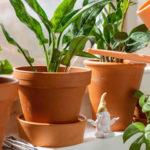 Prišla jar aizbové rastliny si žiadajú hnojenie adostatočné polievanie. Viete, ako na to?