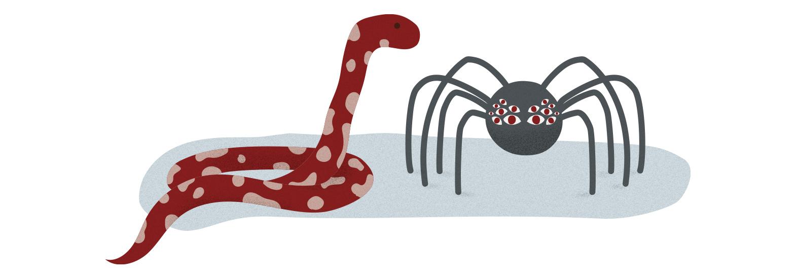 strach z pavouků