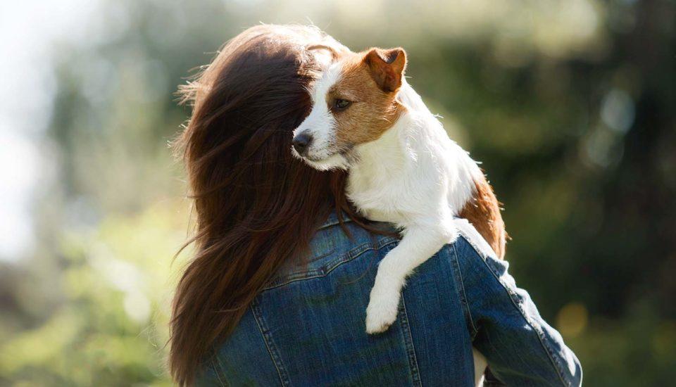 Zoznam vecí, na ktoré sa musíte pripraviť, kým si adoptujete psa zútulku