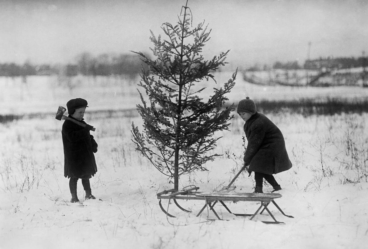 Full-length image of two children standing in a snowy field, inspecting an evergreen tree to use for their Christmas tree. They have come prepared with a sleigh, an ax, and a shovel. (Photo by Edwin Levick/Getty Images)